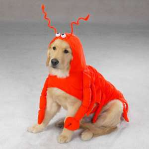 Casual Canine Lobster Pet Dog Halloween Costumes XS XXL